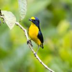 Bird at Guayabo Lodge, Turrialba Volcano. Courtesy of Luciano Capelli