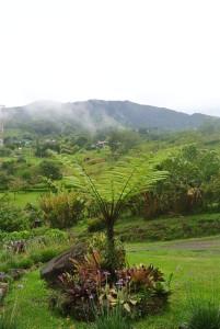 Turrialba Volcano & tree fern 2016