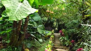 The wild garden at Guayabo Lodge