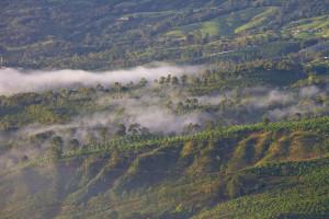 The Aquiares coffee Hacienda, Turrialba at dawn. Courtesy of Luciano Capelli