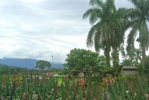 Empty sugarcane wagons, Atirro