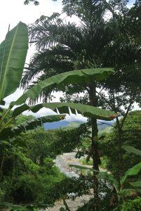 Rio Pejiballe: Turrialba's Tropical Riviera