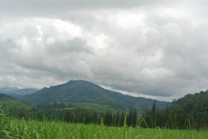 Sugarcane plantation, Atirro